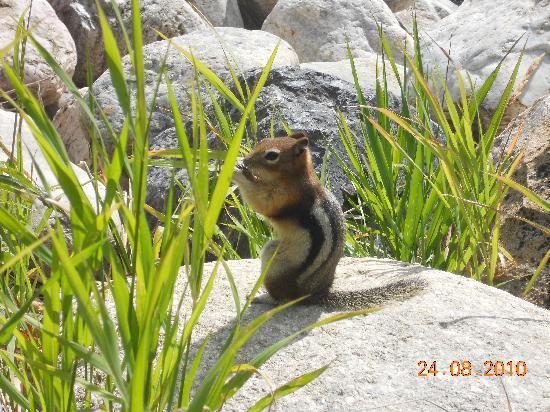 Mount Revelstoke National Park: Tierwelt