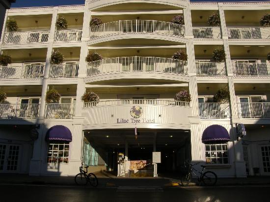 Lilac Tree Suites & Spa : The front of the hotel