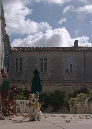 Pierre & Vacances Résidence Premium Le Palais des Gouverneurs : Pooch