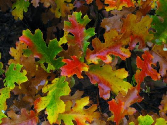 Quincy, CA: Coming attractions Awesome Autumn at Ada's  Gardens