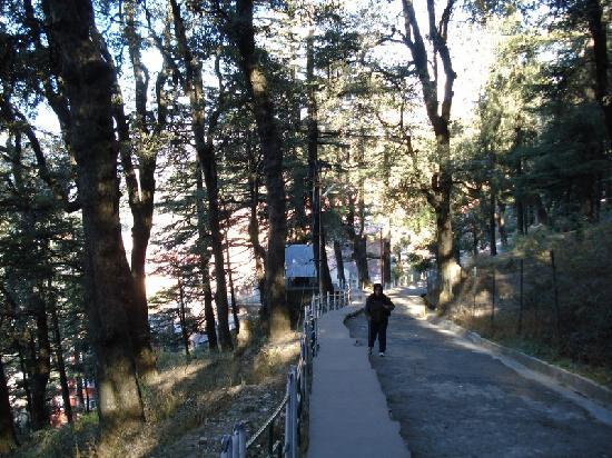 Shimla, India: way to Jakhu Temple