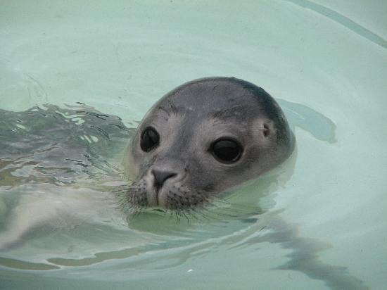 The Ramblers Guest House: Seal at Skegness