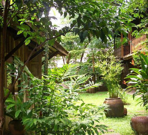 Tanita House: Tropical garden