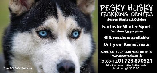 Pesky Husky Trekking Centre