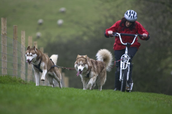 Pesky Husky: Enjoying a trek!