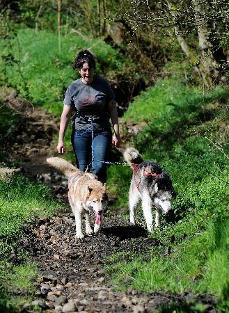 Pesky Husky: Enjoying a Husky Hike!