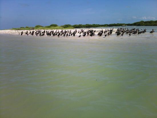 Celestun, Mexico: Lugar de descanso de aves, ahí puedes ver a varias especies, cormoranes, gaviotas, patos, pelica