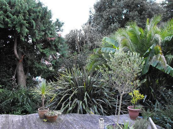 Cary Court Hotel: The garden