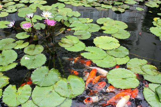 Hualien FarGlory Hotel: Koi ponds on hotel property.