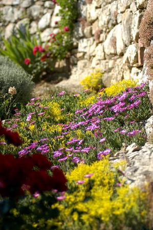 Collelungo: flowers