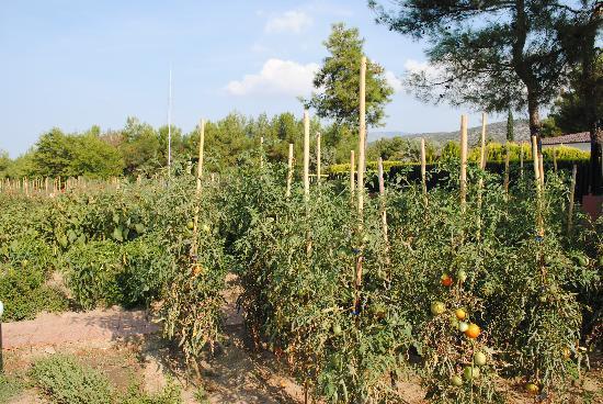 Alexandra Beach Thassos Spa Resort: own veg garden
