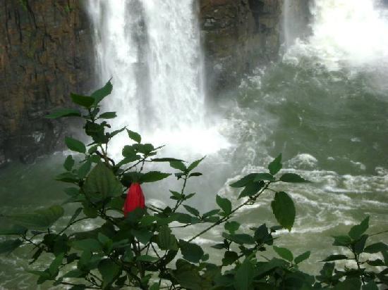 Falls Galli Hotel: Cataratas