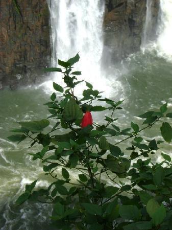 Falls Galli Hotel: Cataratas 2