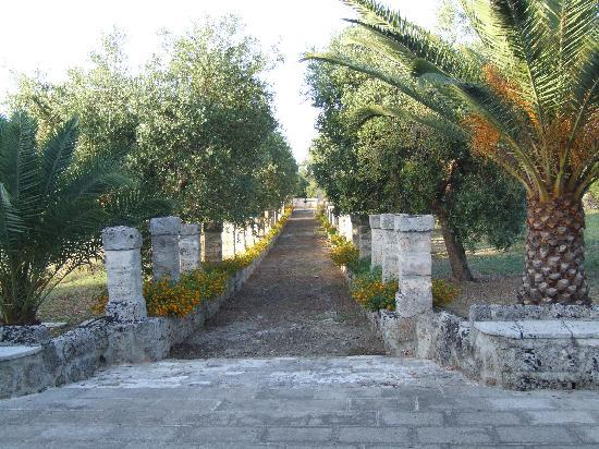 Masseria Marianna : viale