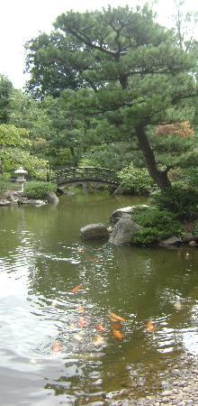 Anderson Japanese Gardens: Koi in pond with small bridge in background
