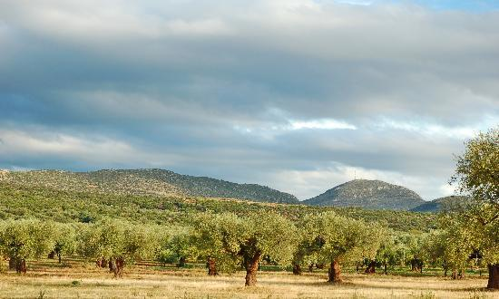 Eumelia Organic Agrotourism Farm & Guesthouse: View of the organic olive grove