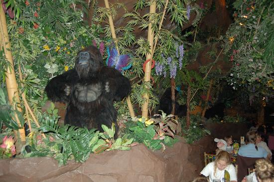 burger king kong picture of rainforest cafe san francisco rh tripadvisor com my