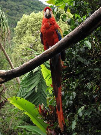 Hotel Atitlan: Papagei im Garten
