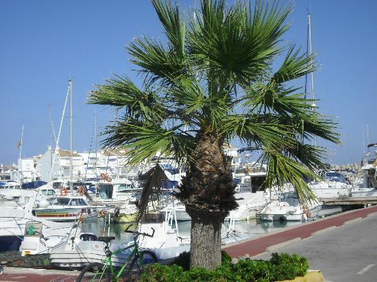Alcossebre, Espagne : Marina