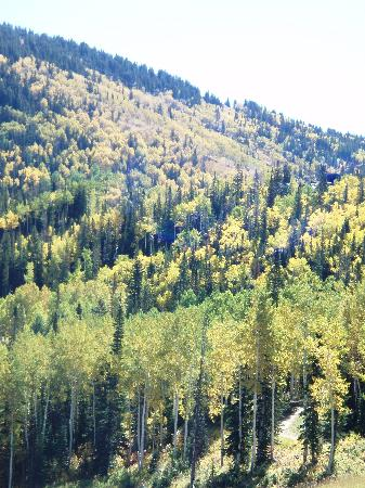 Torian Plum Condominiums: fall colors shown on the ski slopes