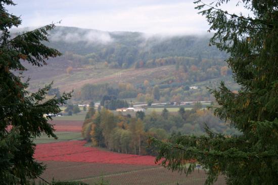 Adytum Sanctuary: Blueberry fields in the valley below in Autumn