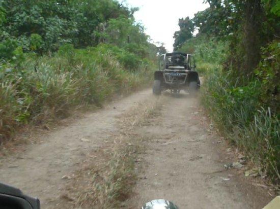 Buggy Fun Rentals: bush track