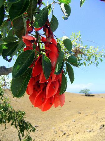 Makai Hale: flower