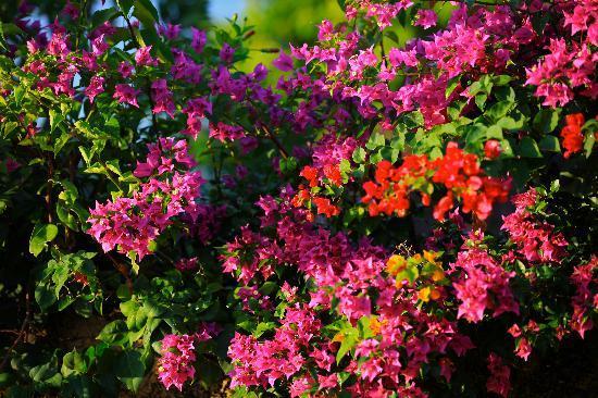 Et des fleurs magnifiques