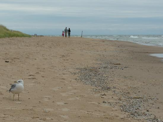 Saugatuck, MI: Douglas Beach; great for a relaxing walk.