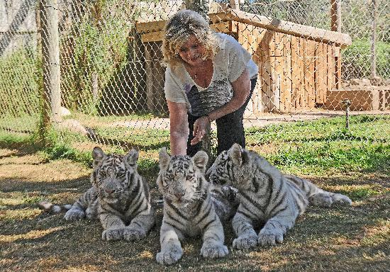 Cango Wildlife Ranch: Maggie with Tiger Cubs