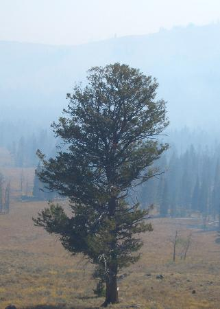 8e401afb45c54 A lone tree in the dense smoke - Picture of Tower Fall