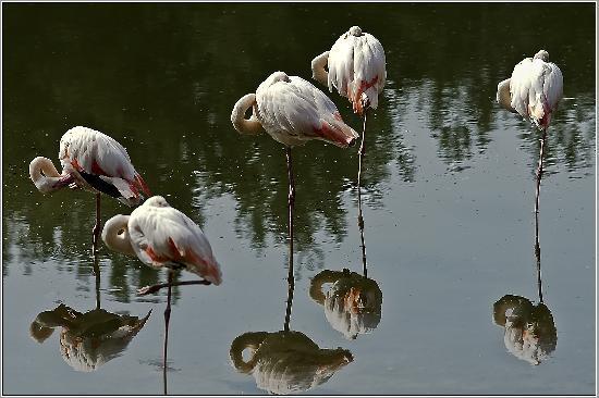 Oranienburg, Deutschland: Flamingos im Tierpark