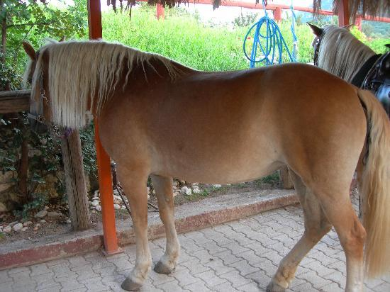 Bavarian Horse Riding Stables: Luna