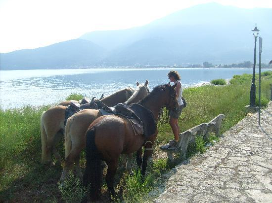 Bavarian Horse Riding Stables: having a rest