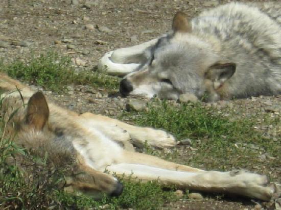 International Wolf Center照片