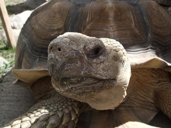 Colorado Gators Reptile Park: Tortoise