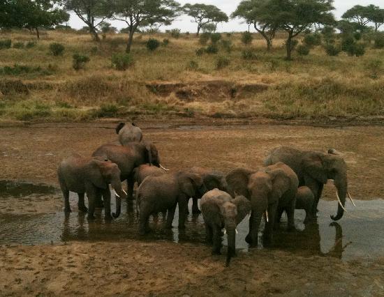 Arusha, Tanzania: Elephants du Tarangire