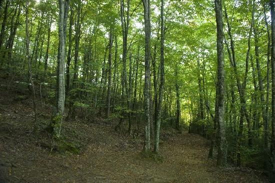 Bosque de hayas Hotel rural Campalans