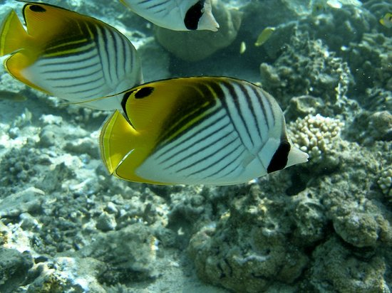 Aitutaki Glass Bottom Tour: Great snorkelling