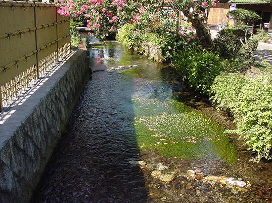 Jizo River : 地蔵川の梅花藻と百日紅