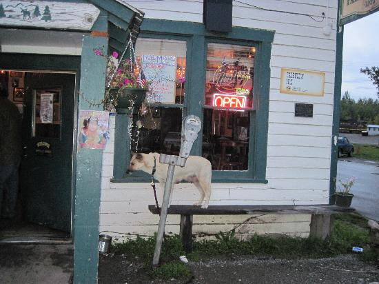 Talkeetna Cabins: Dog Waiting For Owner at Fairview Hotel/Bar