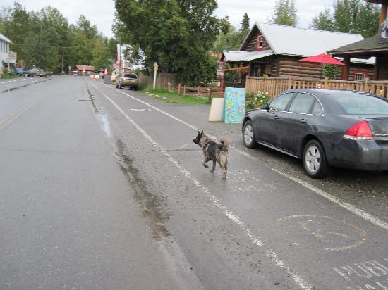 Talkeetna Cabins: The Wandering Dogs of Talkeetna