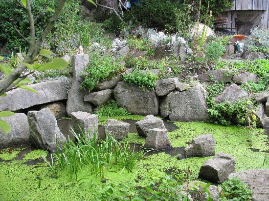 Serenity by the Sea Retreat: Japanese Water Garden