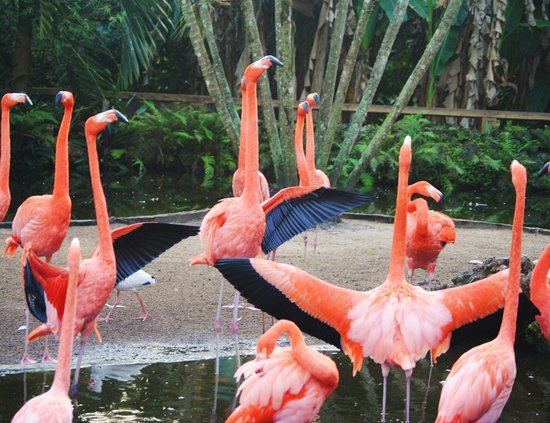 Flamingo Gardens: Flamingos