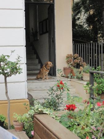Cucciolo At Home Picture Of Palm Gallery Hotel Rome Tripadvisor