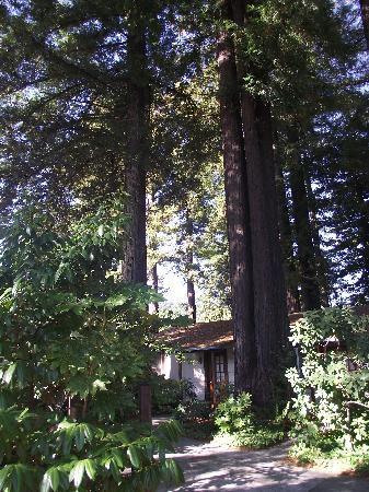 Miranda Gardens Cabin #1
