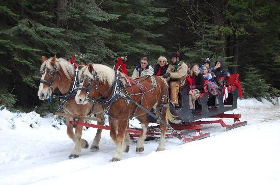 Tenaya Lodge at Yosemite: Horse-drawn Sleigh Rides