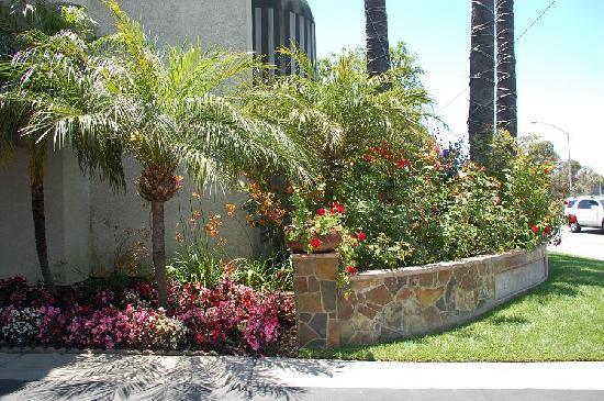 BEST WESTERN PLUS Newport Mesa Inn: Best Western Newport Mesa Inn plants