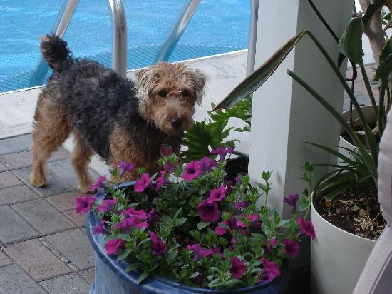 La te da B&B: Lucy our resident Welsh Terrier will show you around