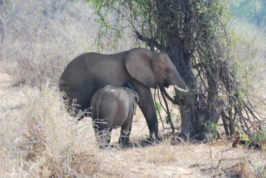 Lion Sands - Tinga Lodge: Elephants at our back door
